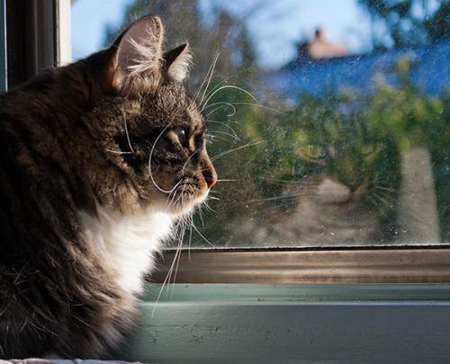 Thomas Reflecting