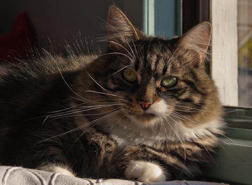 Thomas looking intense 1