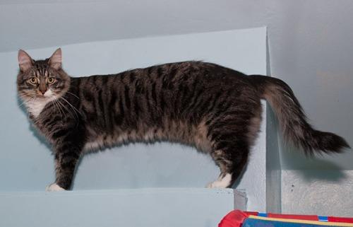 Thomas wiener cat