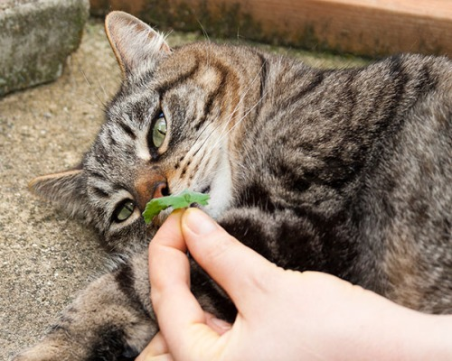 Catnip Surprise 10