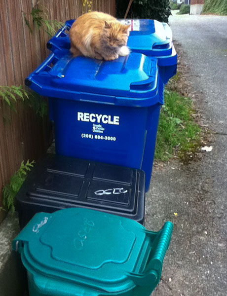 Mama Cat on recycling bin