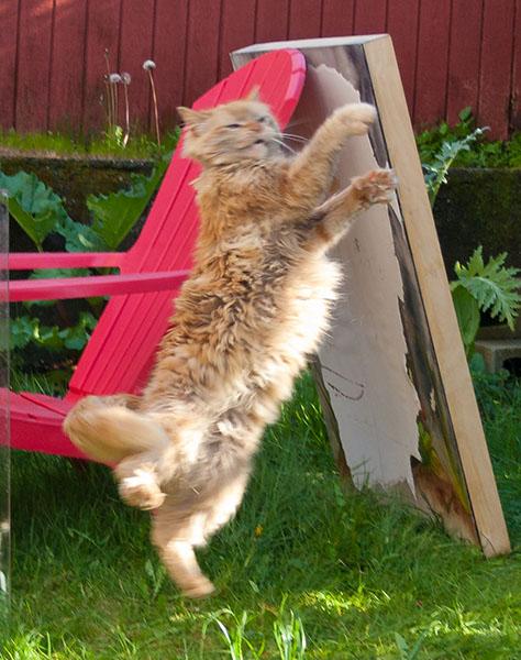 Mama Cat workout 12