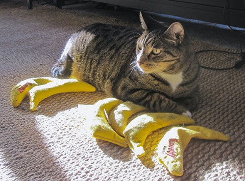 Oliver guarding bananas