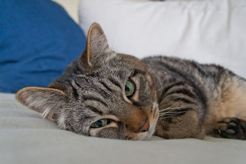 Otis hangover