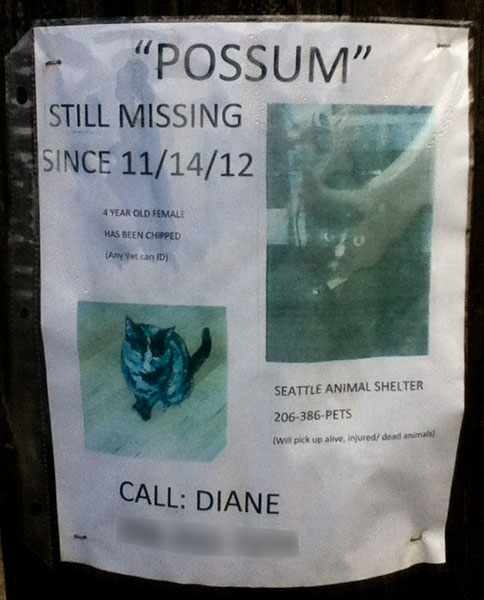 Lost Cat- Possum 2-2