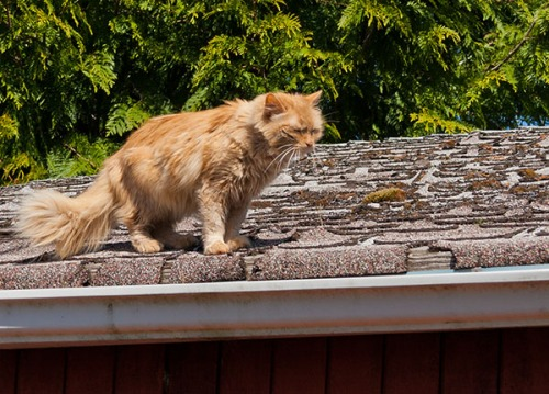 Mama on the roof again 3