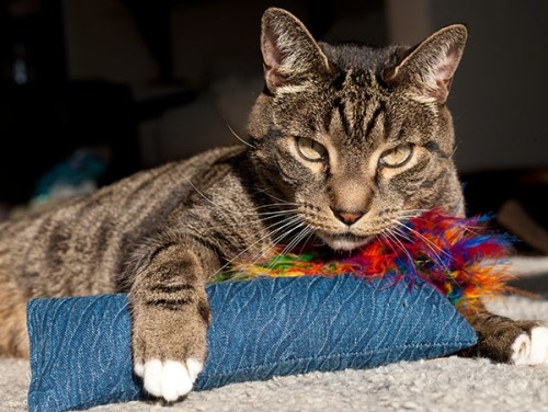 Oliver with toy