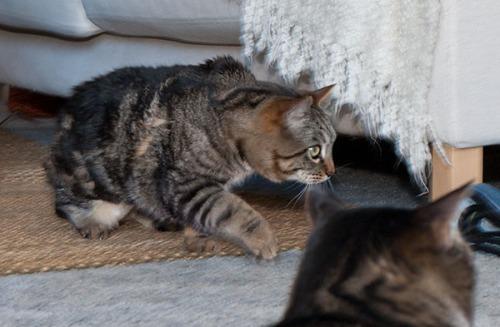 Otis anticipating the next move of the bird