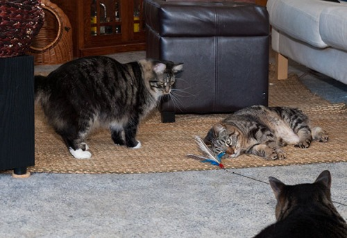 "The Leader let the bird go and said, ""OK Thomas. Now it's your turn. First though I want to see your pounce. Go ahead and pounce on the bird as it is sitting still."""