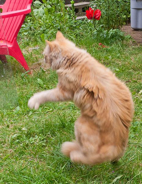 Mama Cat doing practice Catmikaze