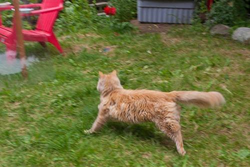 Mama Cat running