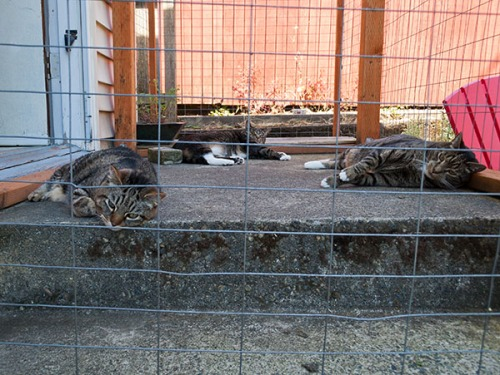 Oliver, Henry, Otis hot in enclosure 4