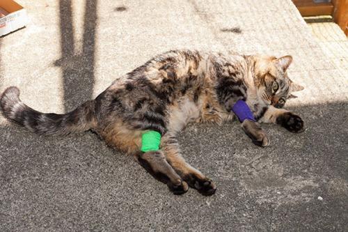 Otis after vet visit