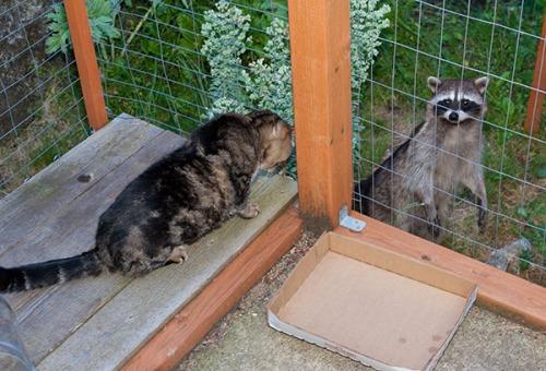 Otis and Raccoon