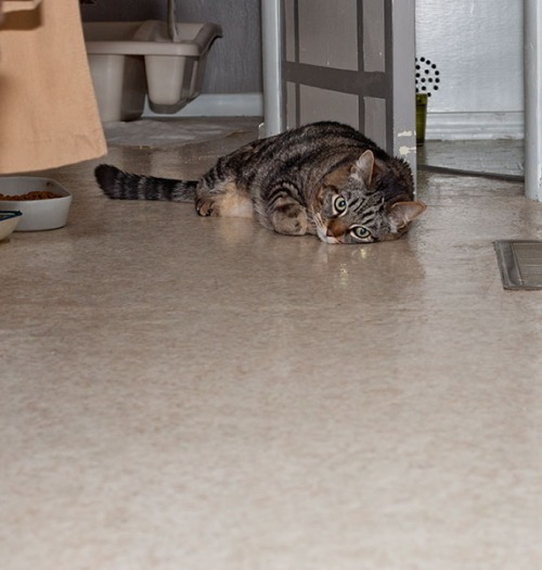 Otis in the hallway