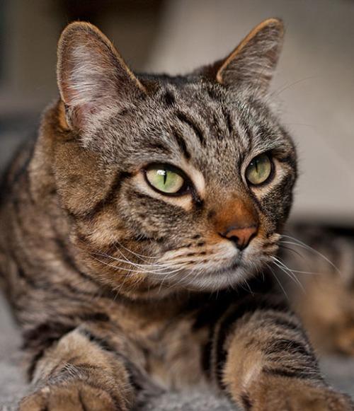 Otis looking hopeful