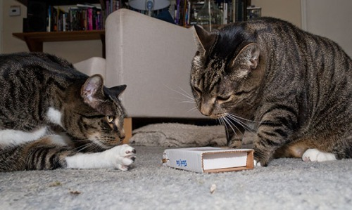 Brother Henry asks Oliver what he is doing
