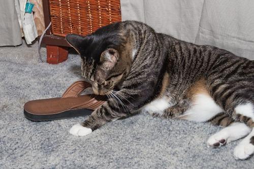 Henry sandal boy 2