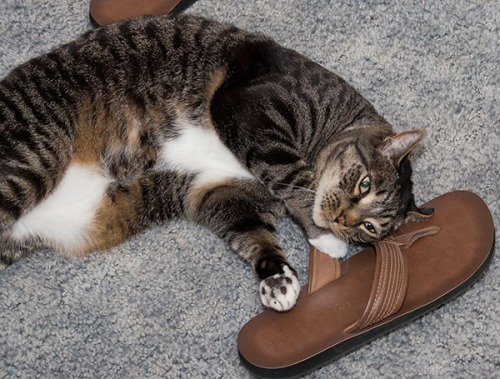 Henry sandal boy 3