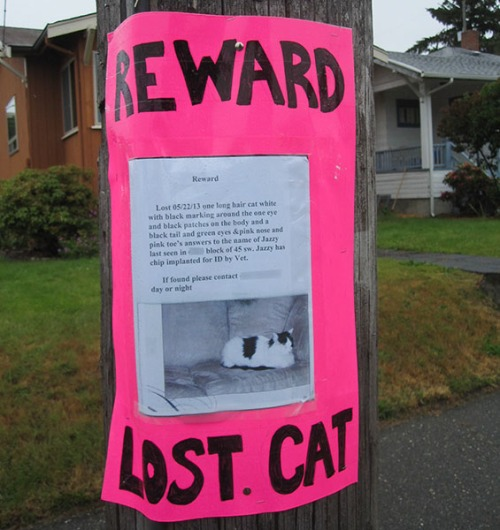 Lost Cat Poster- Jazzy-1