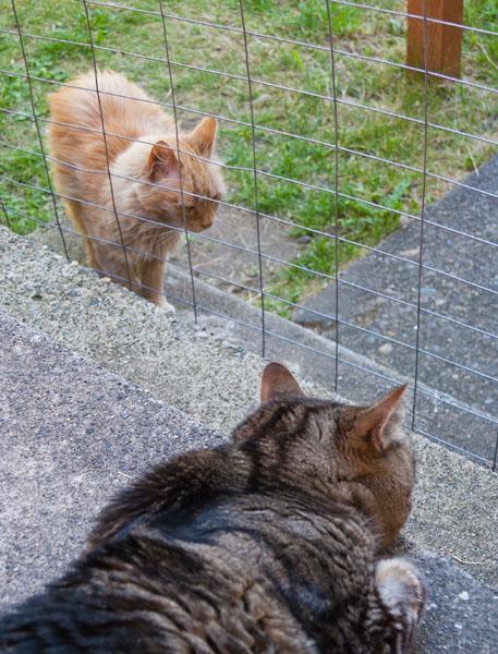 Mama Cat and Otis