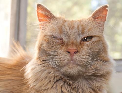 Mama Cat eye closeup