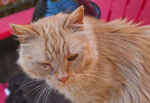 Mama Cat eye problem, 070613-6