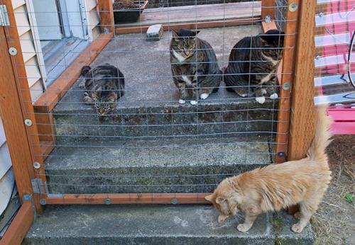 Mama Cat eye problem, Henry, Otis, Oliver