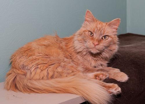 Mama Cat, on shelf 071913-3