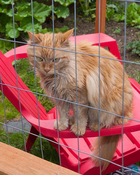 Mama Cat outside