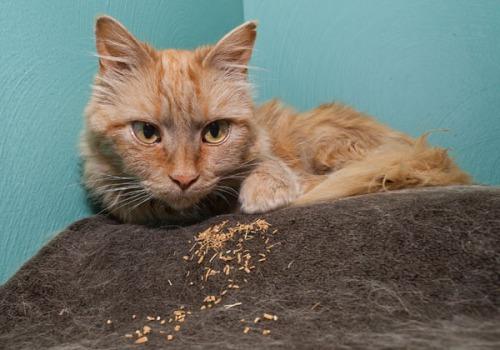 Mama Cat, valerian root 072813-1
