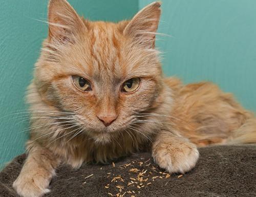 Mama Cat, valerian root 072813-5
