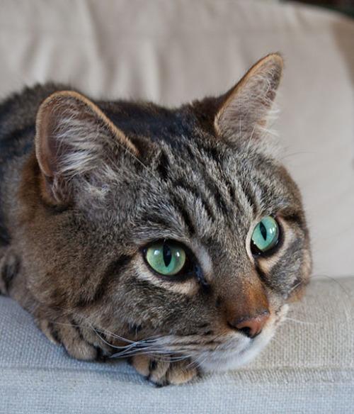 Otis on couch, 070713