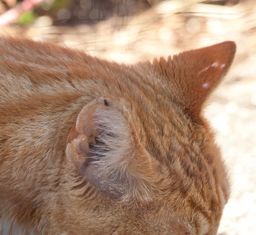 Theo's ears