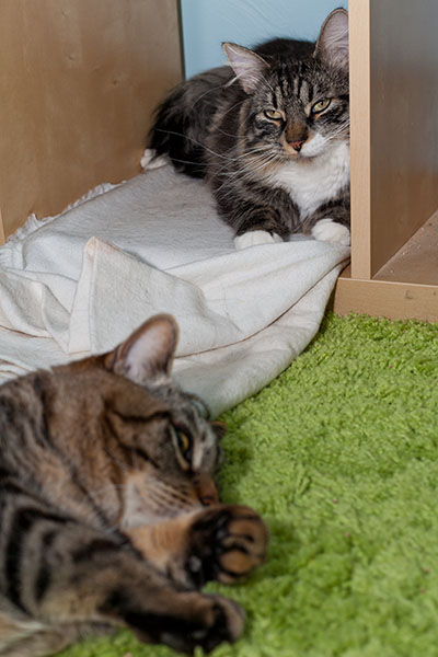 Thomas and Otis in valhalla resting