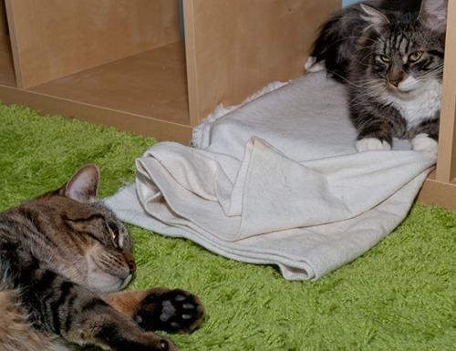 Thomas and Otis in valhalla