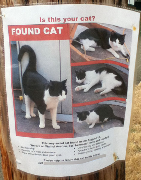 Found Cat Poster, tuxedo