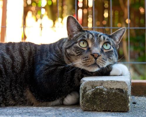 Henry on sacred brick