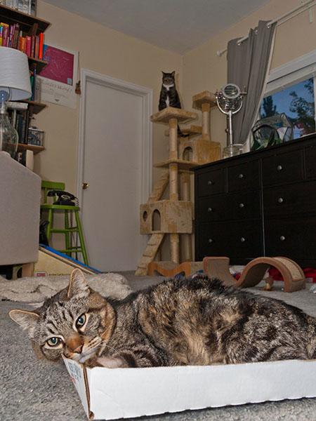 Otis and Henry in living room, Otis annoyed