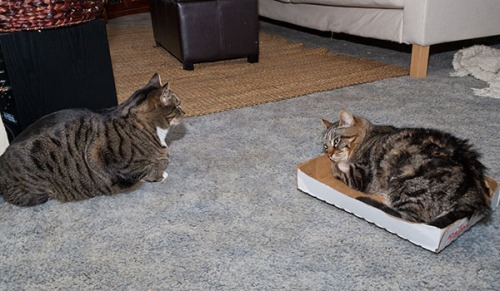 Otis and Oliver in living room talking about Henry