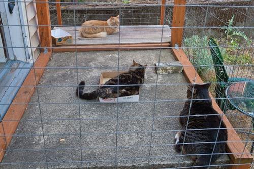 Otis, Henry and Mama Cat intervention 4