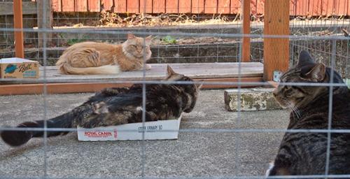 Otis, Henry and Mama Cat intervention 5