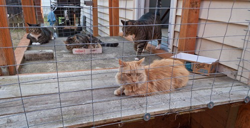 Otis, Henry and Mama Cat intervention 6