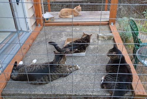 Otis, Henry and Mama Cat intervention 7