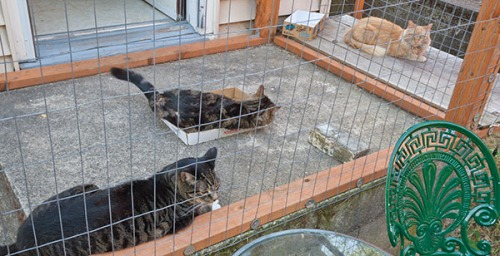 Otis, Henry and Mama Cat intervention 8