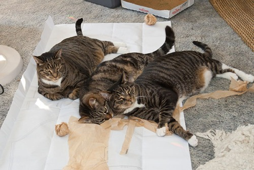Otis, Oliver, Henry on patterns, 071413-44