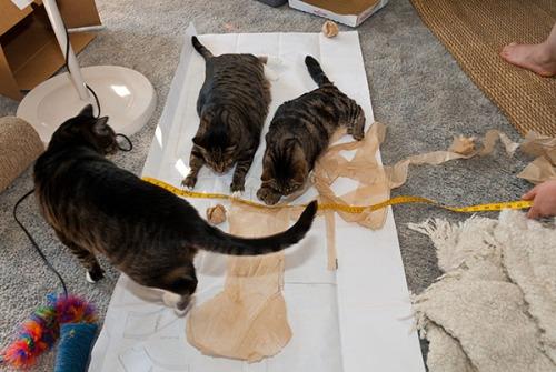 Otis, Oliver, Henry on patterns, 071413-52
