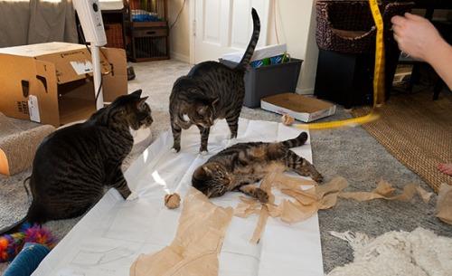 Otis, Oliver, Henry on patterns, 071413-56