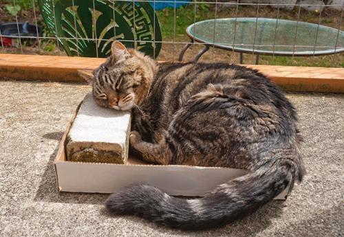 Otis with sacred brick in box 2