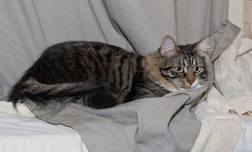 Thomas in living room on curtains